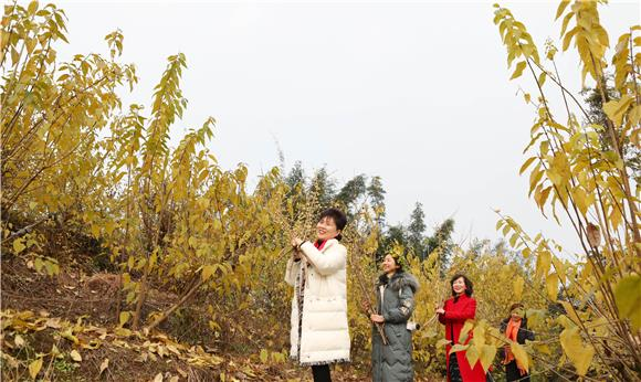 1游客抱着腊梅走在梅花丛中。通讯员 陈仕川 摄