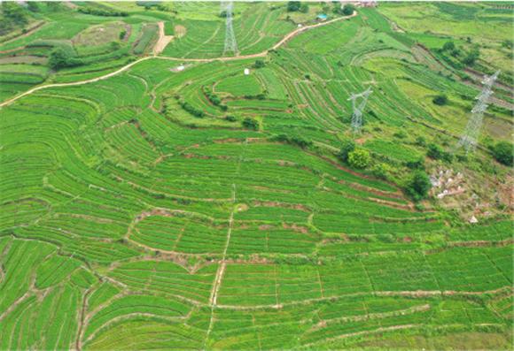 南宁市邕宁区蒲庙镇的田园景色(5月9日)。新华社记者 周华 摄1