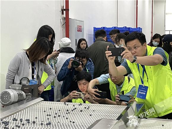 3全国网媒记者在嘉蓝悦霖蓝莓加工厂参观蓝莓出厂过程。华龙网-新重庆客户端 张馨月 摄